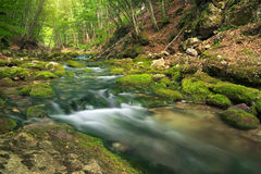 Mountain river in forest and mountain terrain. Stock Photography