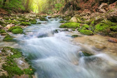 Mountain river in forest and mountain terrain. Royalty Free Stock Image