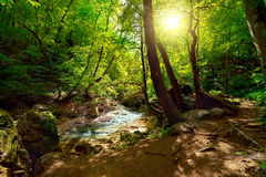 The mountain river in the forest Stock Images