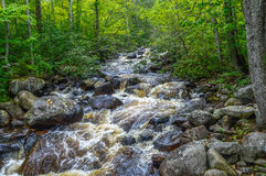 Mountain river. And the forest, North, Canada Stock Photo