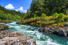 Mountain river and forest in North Cascades National Park Washington USA. Mountain river and forest in North Cascades National Park Washington  USA Stock Photo