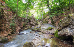 Mountain river in forest Stock Photos