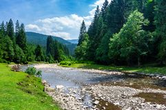 Mountain river among the forest in summer. Rocky shore and grassy banks. low water capacity. green ancient spruce forest on hillside. cloud formation on blue Royalty Free Stock Photos