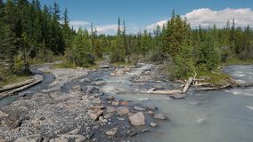 Mountain river in the forest. Mountain river forest trees summer green royalty free stock image