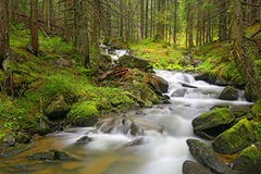 Mountain river in green Carpathian forest Stock Image