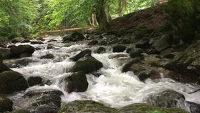 Mountain river in the green forest stock video footage