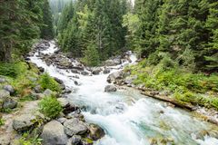Mountain river in the green forest Stock Photo