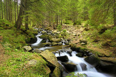 Mountain river in green forest Royalty Free Stock Image