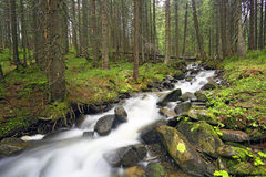 Mountain river in green forest Royalty Free Stock Photos
