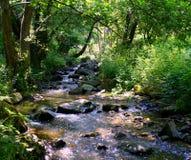 Mountain river Royalty Free Stock Image