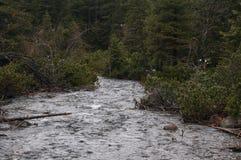 Mountain river in high Tatras, Poland Stock Photography