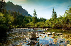 Mountain river in High Tatras in Slovakia Royalty Free Stock Photos