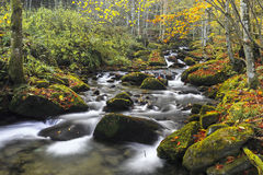 Free Mountain River In Late Autumn Royalty Free Stock Image - 49078986