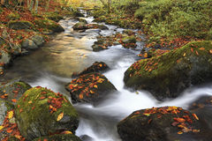 Free Mountain River In Late Autumn Stock Images - 49473174