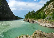 Mountain River Katun, Altai, Russia Royalty Free Stock Photos