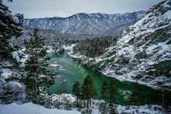 Mountain river Katun, Altai, Russia. A winter scenic. Royalty Free Stock Photography