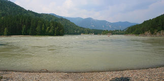 Mountain river Katun near Ust-Muna in Altai Royalty Free Stock Image