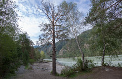 Mountain river Katun, Siberia, Altai Stock Photos