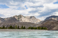 Mountain river Katun in summer, Altai,Russia Stock Images