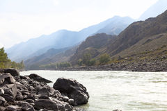 Mountain river Katun in summer, Altai,Russia stock photo