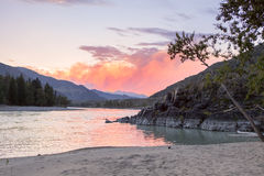 Mountain river Katun in summer, Altai,Russia Royalty Free Stock Photo