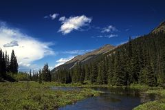 Mountain river landscape. In Colorado Royalty Free Stock Photo