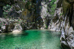 Mountain river. Landscape crystal clear mountain river Royalty Free Stock Image