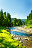 Mountain river. Royalty Free Stock Photo