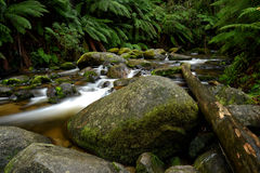 Mountain river with large rocks and tree ferns Stock Image