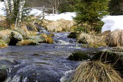 A mountain river with large stones in winter surrounded by trees, dry old grass and snow residue. Wild mountain river with large stones at the end of winter Stock Photography
