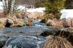 A mountain river with large stones in winter surrounded by trees, dry old grass and snow residue. Wild mountain river with large stones at the end of winter Stock Photos