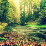 Mountain river with low level of water, gravel with colorful beech, aspen and maple leaves. Fresh green mossy stones and boulders Stock Photo