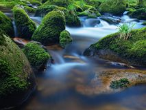 Mountain river in motion over big mossy boulders. Mountain river with dark cold water, autumn weather. Quick river in motion over big mossy boulders. Mountain royalty free stock photo