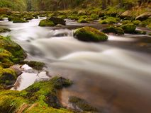 Mountain river in motion over big mossy boulders. Quick river in motion over big mossy boulders. Mountain river with dark cold water, autumn is coming royalty free stock photos