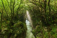 Mountain river. royalty free stock photo
