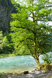 Mountain River in the mountains Stock Image