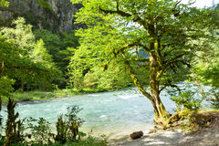 Mountain River in the mountains Stock Images