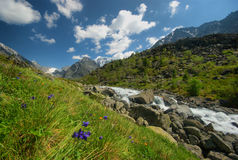 The mountain river in the mountains. Current through the gorge the river. Stones and rocky land near the river. Beautiful mountain Royalty Free Stock Images