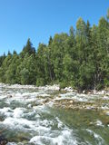 Mountain river Multa, mountain Altai 4 Stock Image