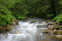 Mountain River. Nice stream in high mountains Stock Photo