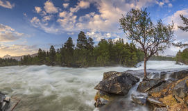 The mountain river in Norway with forest Royalty Free Stock Images