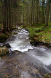 Mountain river. In a pine forest Royalty Free Stock Photography
