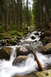 Mountain river. In a pine forest Royalty Free Stock Images