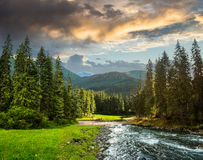 Mountain river in pine forest Royalty Free Stock Images