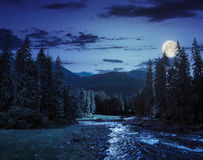 Mountain river in pine forest at night Royalty Free Stock Images