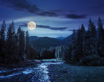Mountain river in pine forest at night Stock Photography