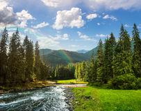 Mountain river in pine forest with rainbow Royalty Free Stock Photo