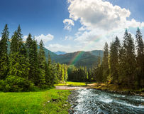 Mountain river in pine forest at sunrise Royalty Free Stock Image
