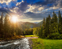 Mountain river in pine forest at sunset Royalty Free Stock Images