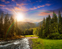 Mountain river in pine forest at sunset Stock Image